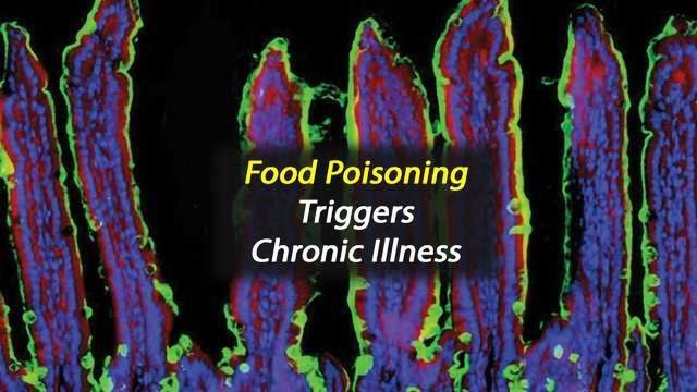 Repeated Mild Food Poisoning Triggers Chronic Disease