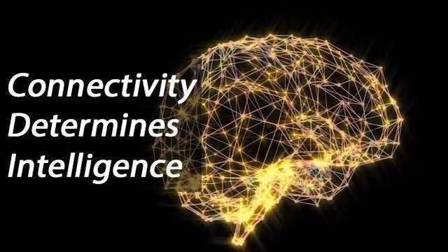 Brain Connectivity Determines Intelligence