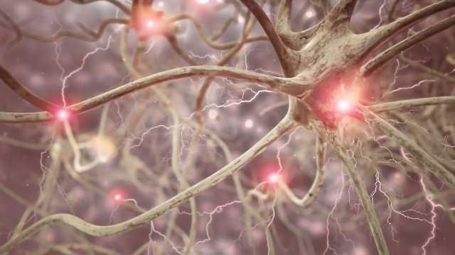 Genetic 'Switches' that Guide Human Brain Development Mapped