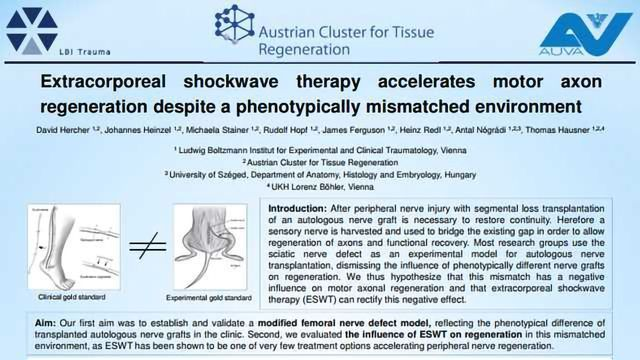 Extracorporeal shockwave therapy accelerates motor axon regeneration despite a phenotypically mismatched environment