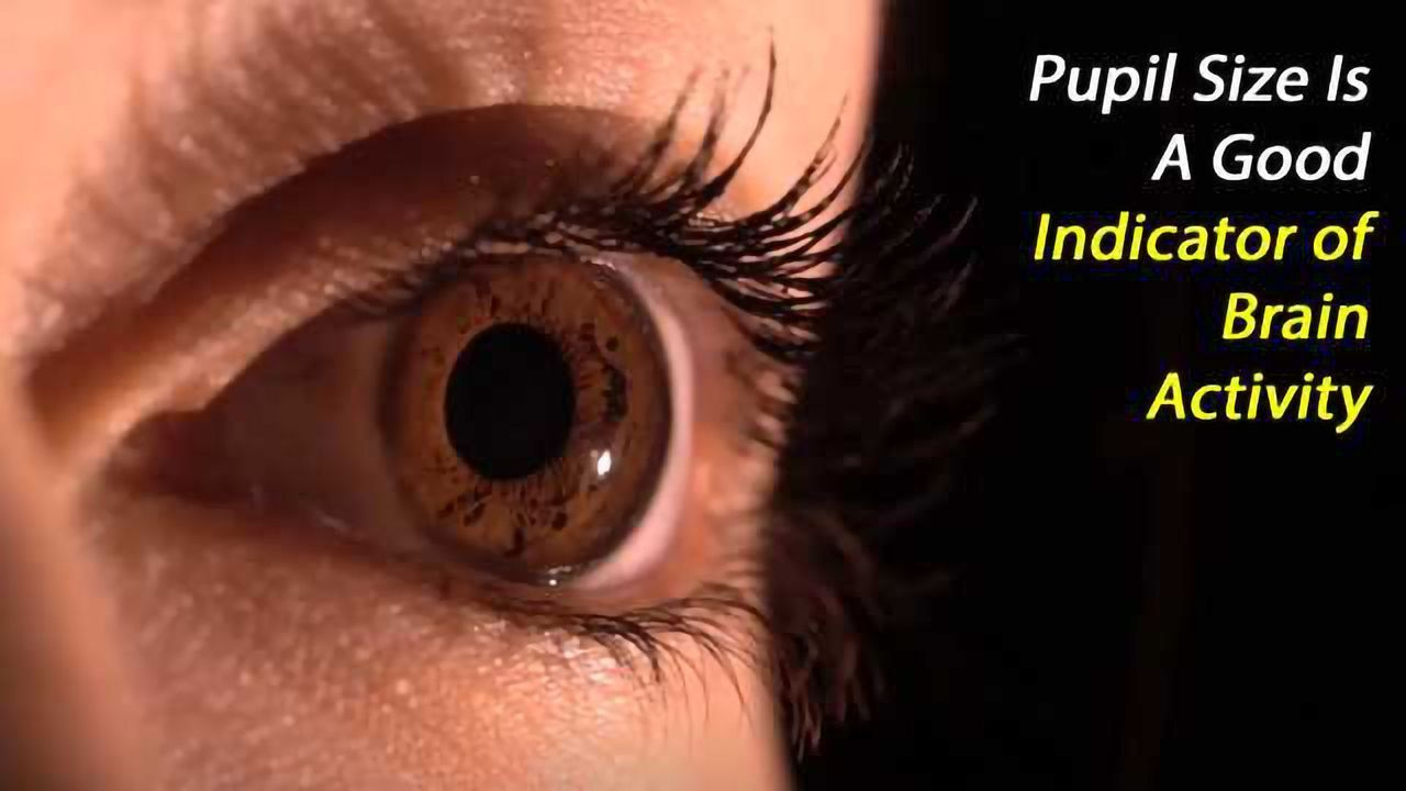 Pupil Size as an Indicator of Brain Activity