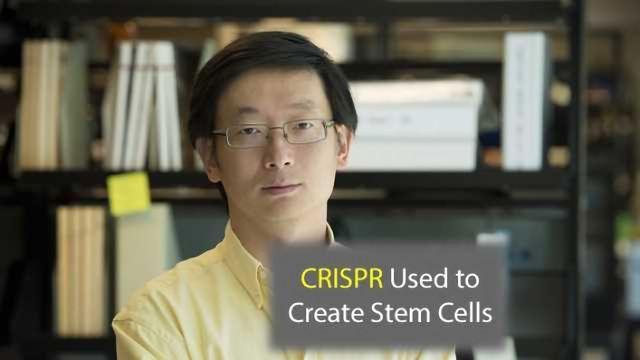 CRISPR Technology Used to Make Stem Cells