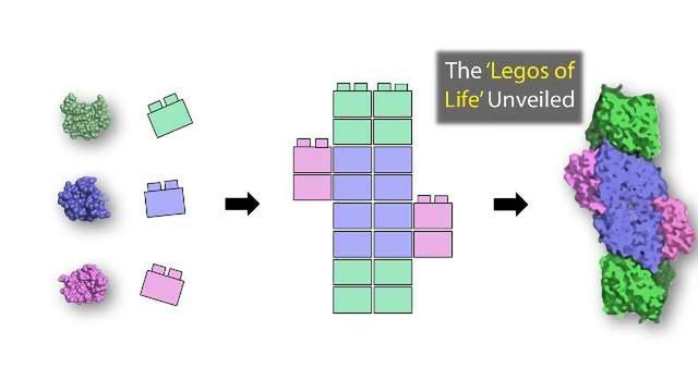 The Legos of Life: Primordial Proteins Unveiled