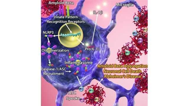 BioLegend Takes a Look at ASC Specks