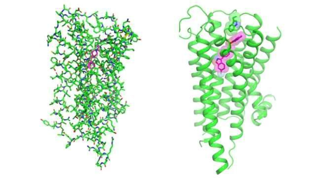 Crystal Structure of Dopamine 2 Receptor Could Lead to Better Antipsychotic Drugs