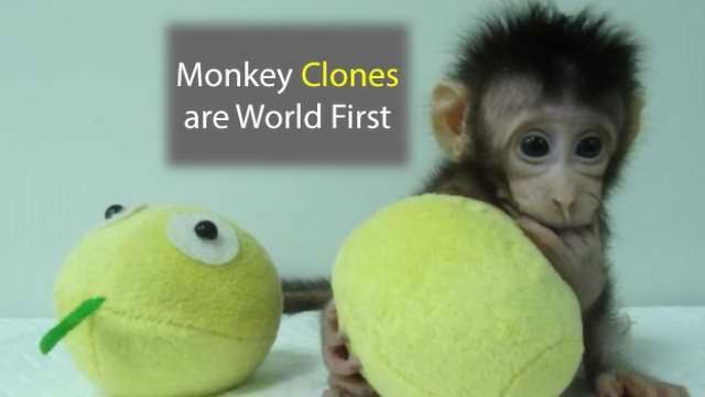 Monkey Clones Created Using Dolly Technique are a World First