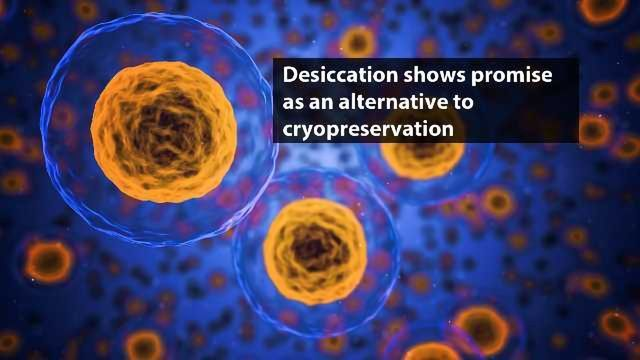 Desiccation Could Provide More Convenient Method of Cell Preservation