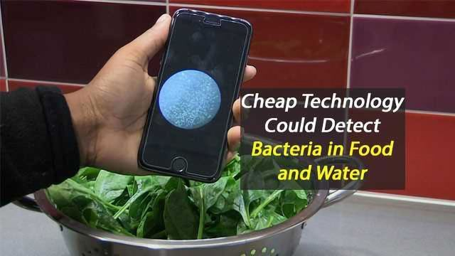 Low Cost Chip to Detect Bacteria in Food and Water