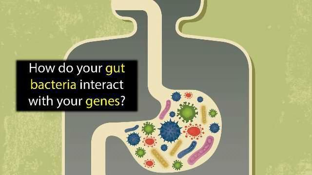 Can Bacteria In Your Gut Explain Your >> The Germ And The Gene Gut Bacteria Research Takes A Step Forward