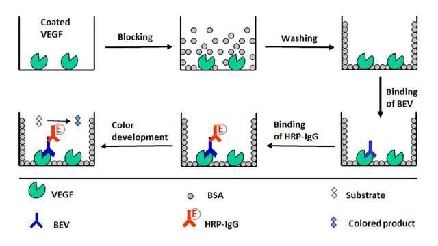 Highly Sensitive ELISA Technique for Bevacizumab Bioanalysis