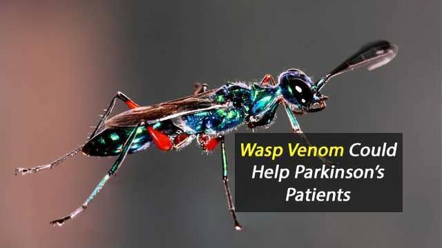 Mind-Controlling Molecules From Wasp Venom Could Someday Help Parkinson's Patients