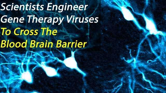 Gene Therapy Viruses Engineered to Cross the Blood Brain Barrier