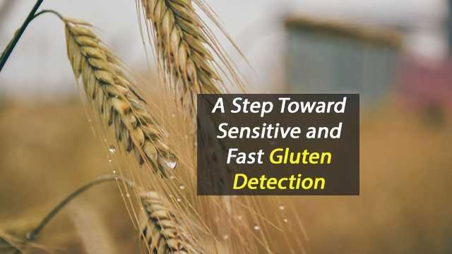 Biosensor Improves Gluten Detection