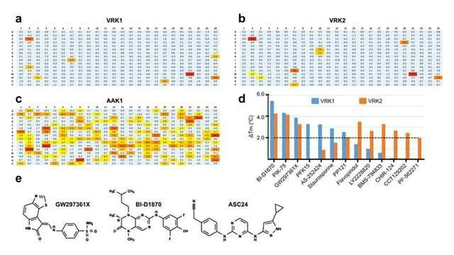 Gaining a Deeper Understanding of Protein Kinases Involved in Cancer