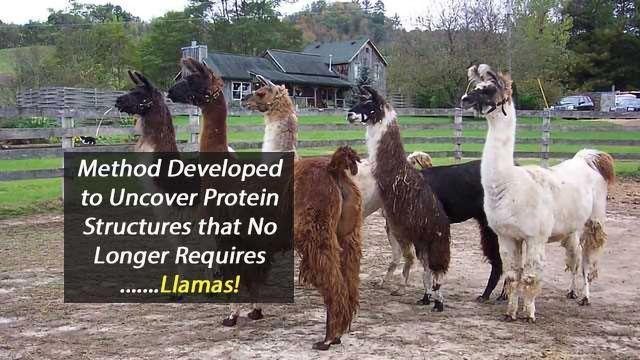 No Llamas Required