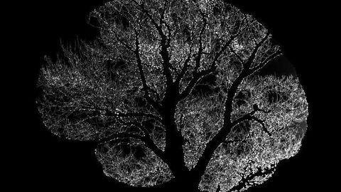Tiny Brain Region Responsible for Strengthening Important Memories Under Stress