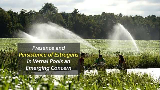 Aquatic Habitats Threatened by Estrogens in Treated Wastewater