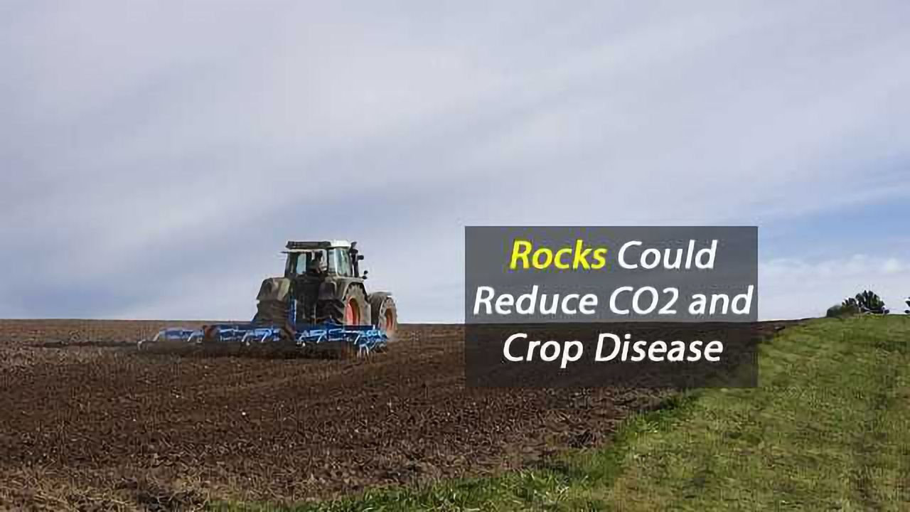 Adding Crushed Rock to Farmland Could Reduce CO2 and Protect Crops from Disease