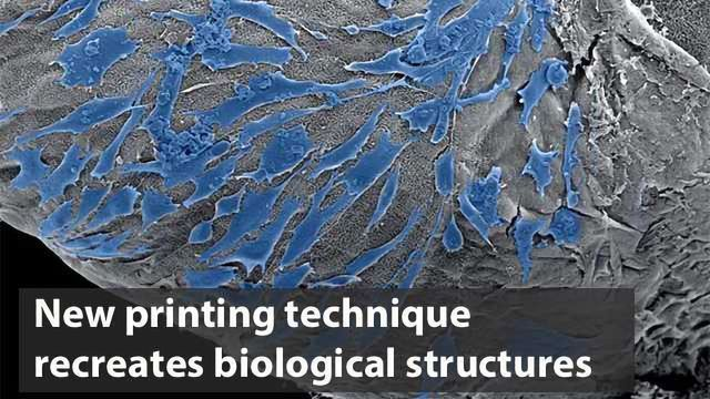 New Printing Technique Uses Cells and Molecules to Recreate Biological Structures