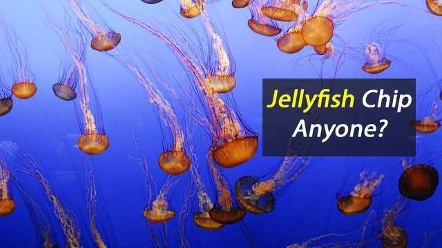 Fancy A Jellyfish Chip?