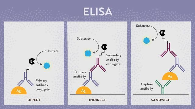 8 Top Tips for ELISA Success
