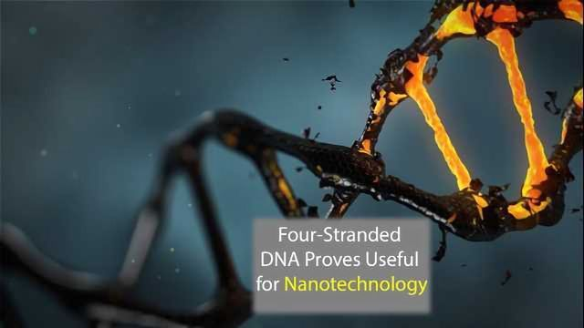 Four-Stranded DNA Proves Able Current Conductor