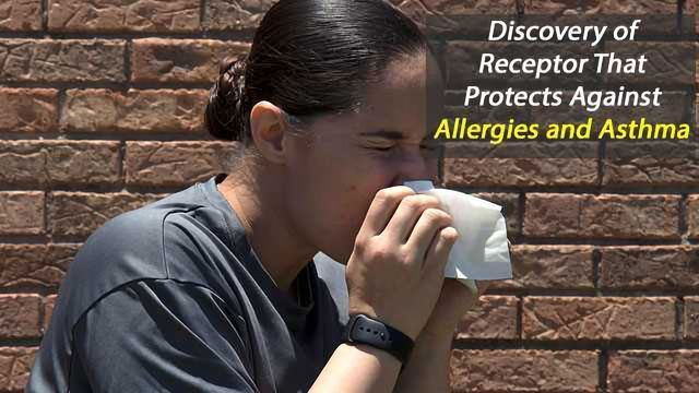 Discovery of Receptor That Protects Against Allergies and Asthma