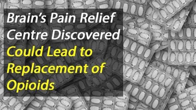 The Brain's Endogenous Pain Relief Centre Has Been Found, Could Improve Painkiller Development