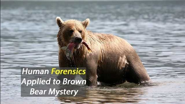 Forensic Technology Used to Genetically Document Infanticide in Brown Bears