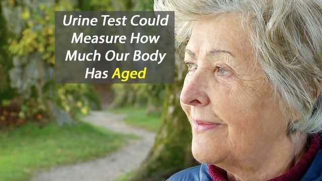 Urine Test Could Define Your Biological Rather than Chronological Age