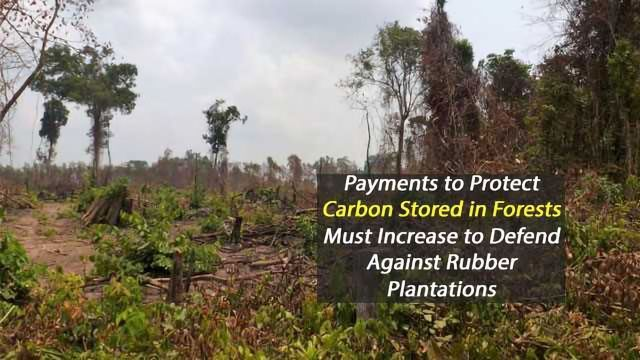 Forest Carbon Credits Insufficient to Protect Against Rubber Plantations