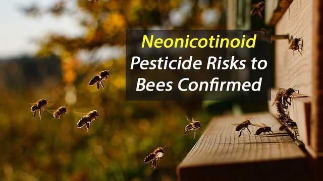 Risk to Bees from Neonicotinoid Pesticides Confirmed