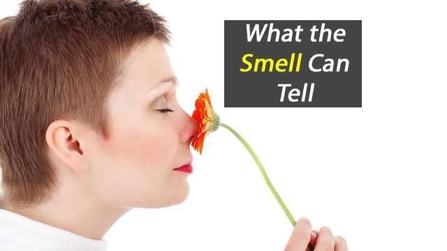 What the Smell Can Tell