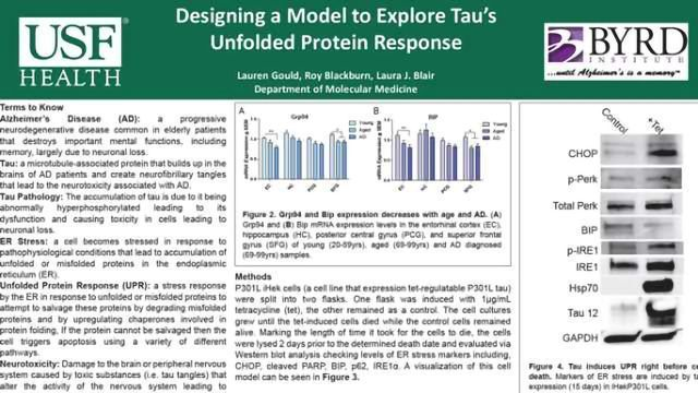Designing a Model to Explore Tau's Unfolded Protein Response