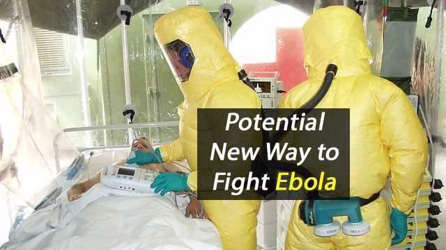 Antibody Therapy Shows Promise Against Ebola