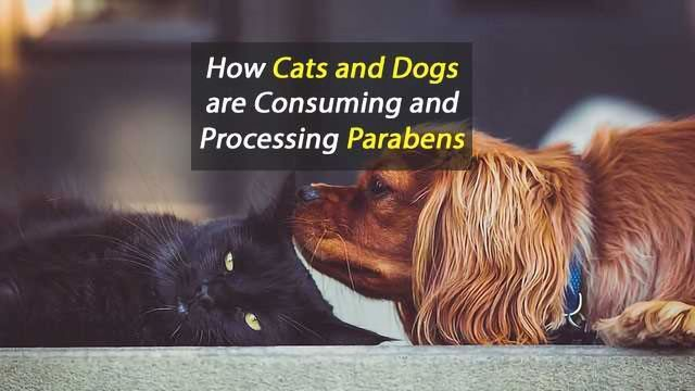 Potential Hazards of Parabens for Household Pets