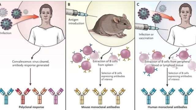 Monoclonal Antibodies Crucial to Fighting Emerging