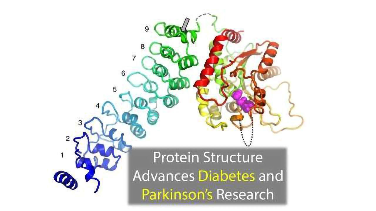 Protein Structure Advances Diabetes and Parkinson's Research