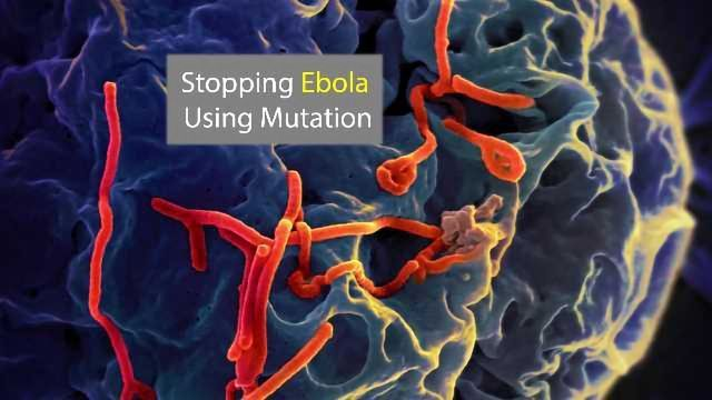 A New Way to Stop Ebola