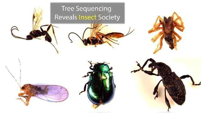 The Genome of a  Single Tree Species Reveals Insect Society