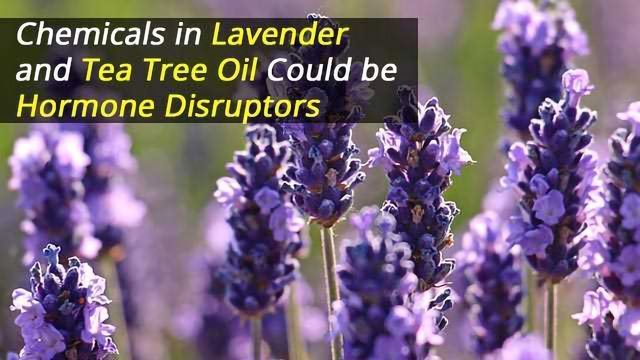 Chemicals in Lavender and Tea Tree Oil Could be Hormone Disruptors