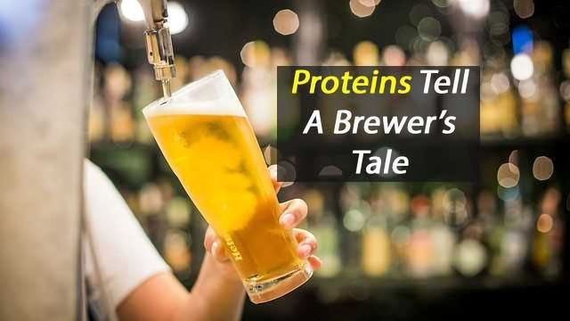 Proteins and the Perfect Pint