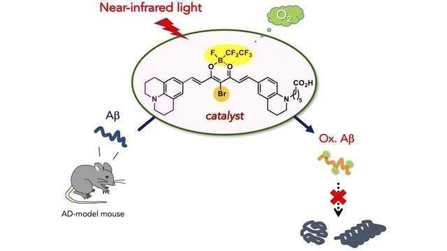 Catalyst Can Degrade Alzheimer's-Related Amyloid Peptide Under Near-Infrared Light