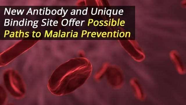 Malaria Prevention: New Antibody Targets Unique Binding Site