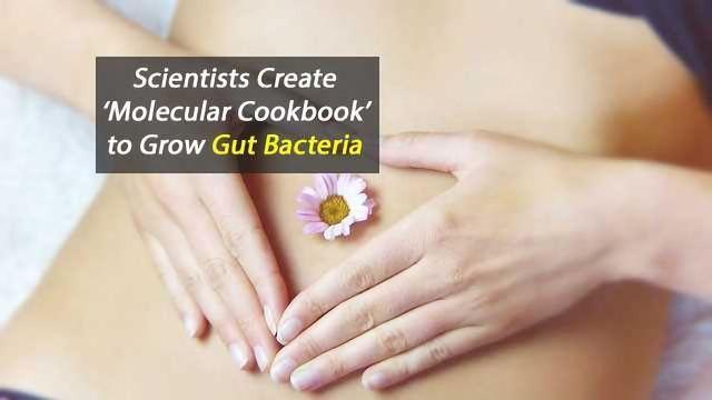 Molecular Cuisine for Gut Bacteria
