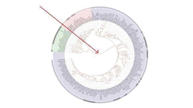 LUCA Lipid Study Refutes Theory of Life's Origin