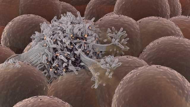 Cancer Stem Cells Redefine How We Think About Cancer