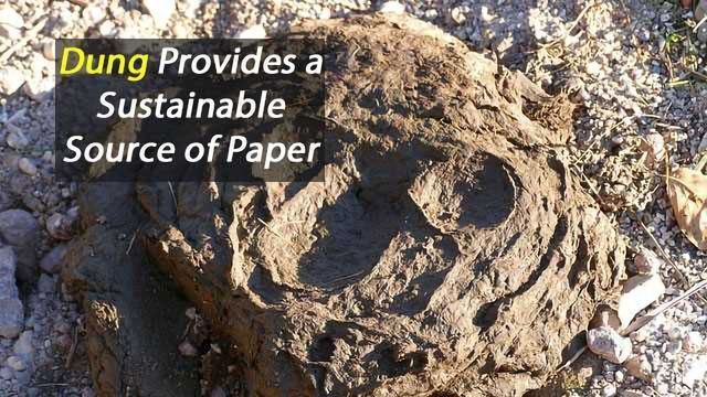 From Poop to Paper