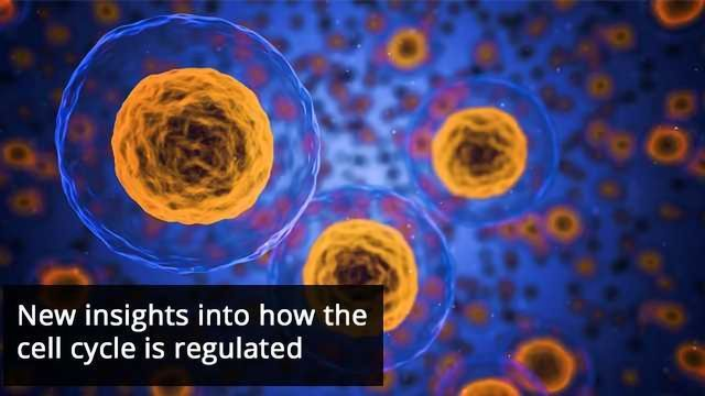 How Proteins Regulate the Cell Cycle