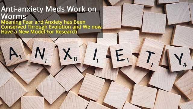 Worms Exhibit Fear and Respond to Anti-anxiety Meds